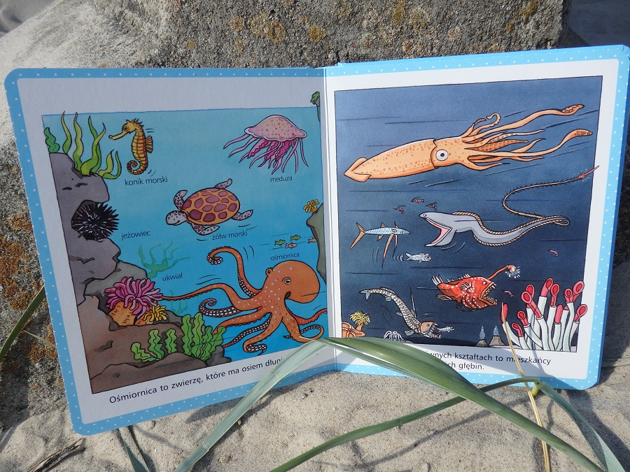 Morze. Obrazki dla maluchów, Olesiejuk, Nathali Bellineau, Sylvie Michelet, Emilie Beaumont