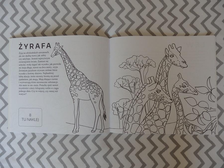 Kolorowa edukacja Zwierzęta świata Wydawnictwo RM
