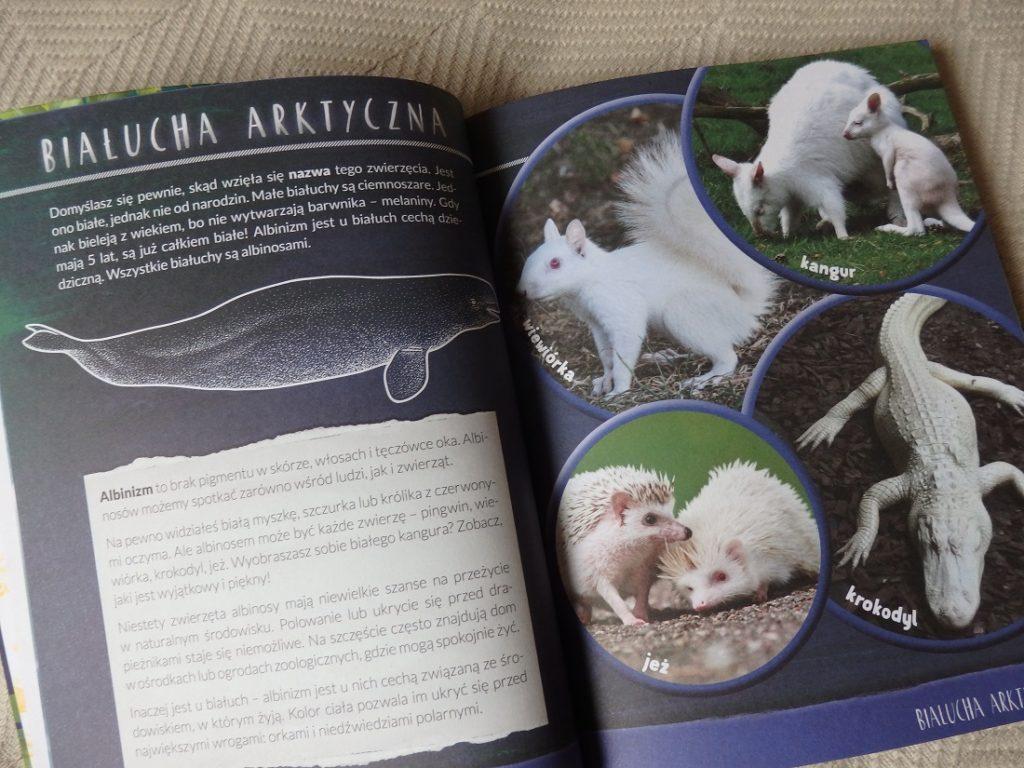 Nela. Mała Reporterka. Zapiski zoologa. Zadziwiające zwierzęta, Burda Media, National Geographic