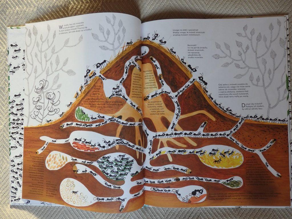 Tysiąc i jedna mrówka, Joanna Rzezak, Nasza Księgarnia